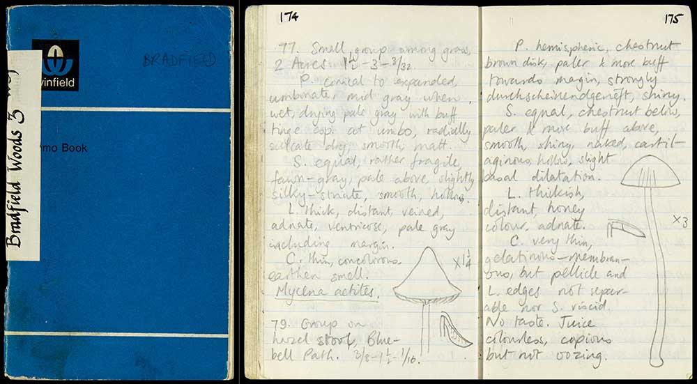 Rackham-archive-digitised-Bradfield-Wood-3-notebook